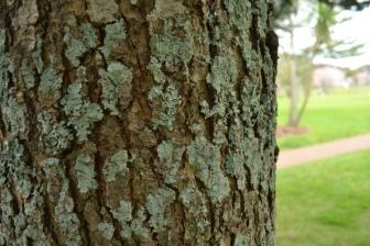 Texture Tree 1